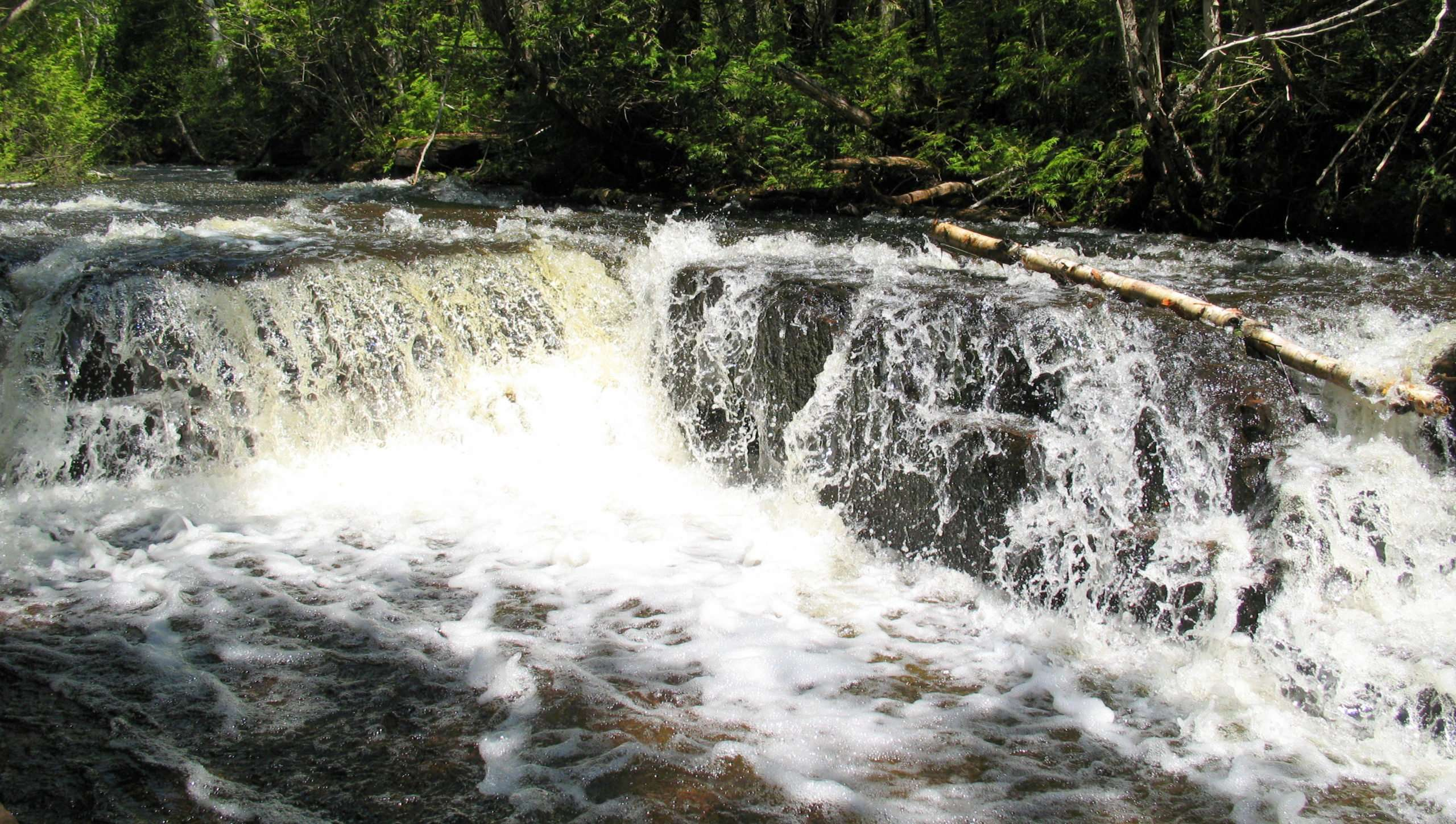Joe Creek Nature Trail
