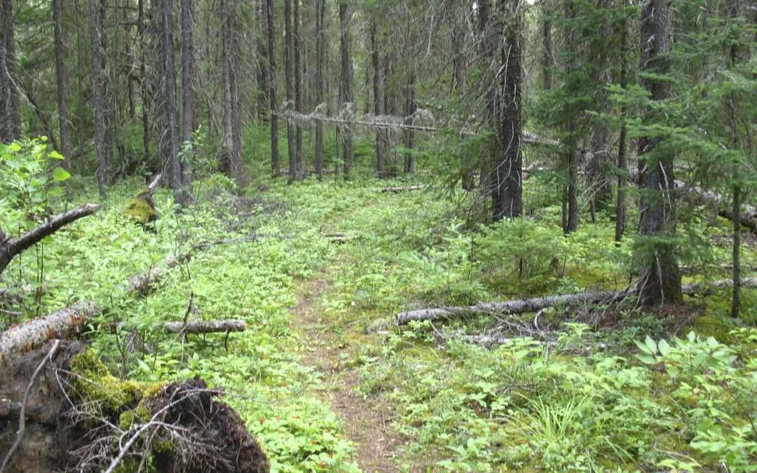 wishart hiking trail thunder bay